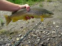 Fly Fishing the Manistee River | Trout Pro Store