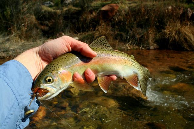 Dukes creek georgia trout pro store for Georgia trout fishing
