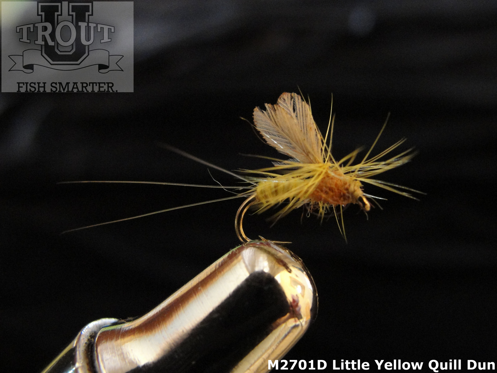 3 yellow quill cdcs size 14 trout flies