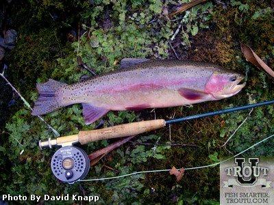 Fly fishing the upper sacramento river california trout for Fishing store sacramento