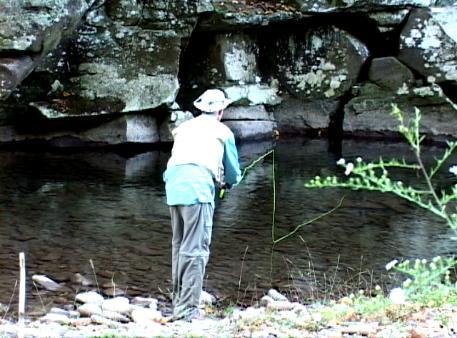 Nearby West Virginia Fishing | Things To Do Near Harmans
