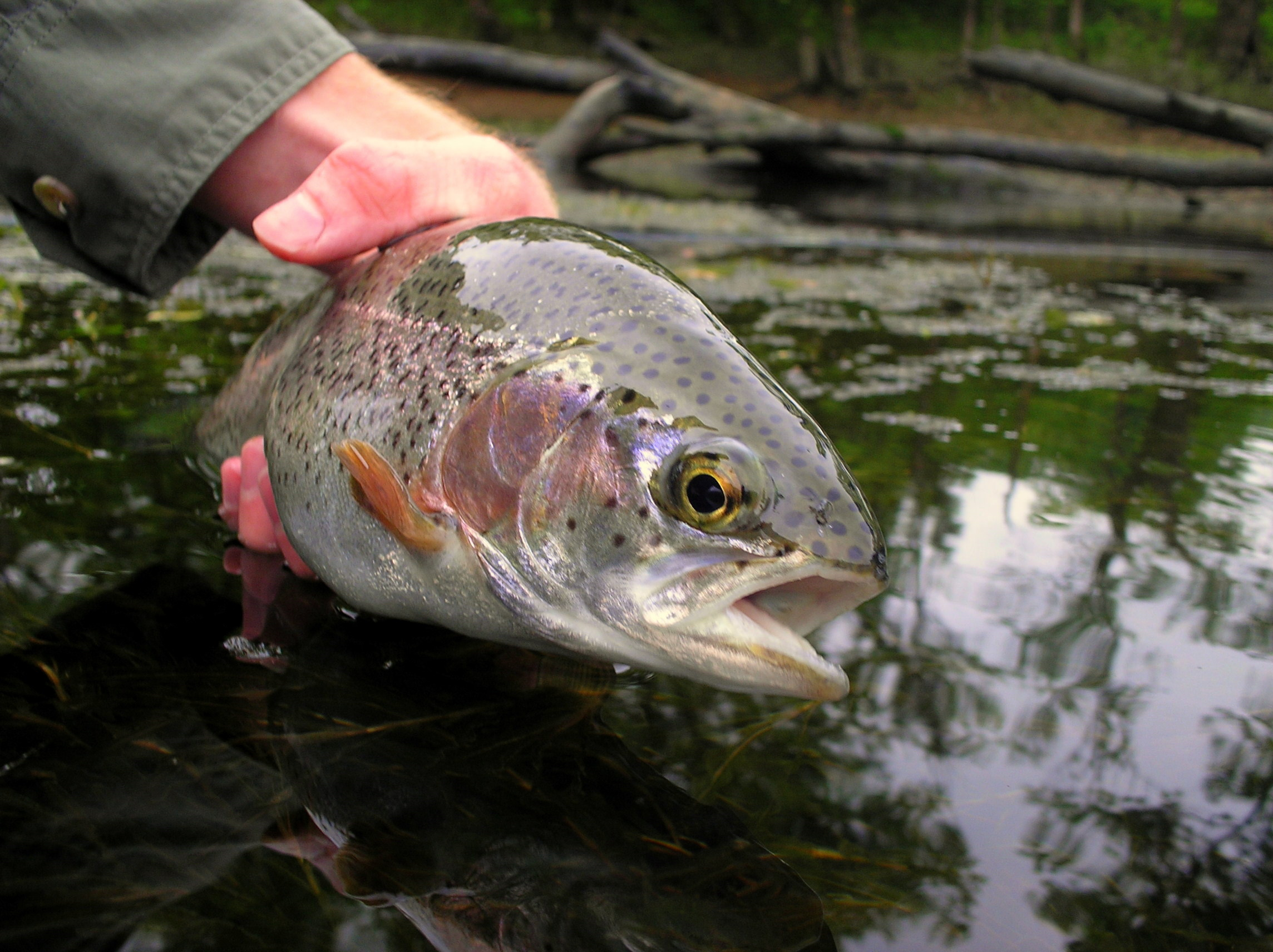 Fly fishing the weber river utah trout pro store for Fish stores in utah