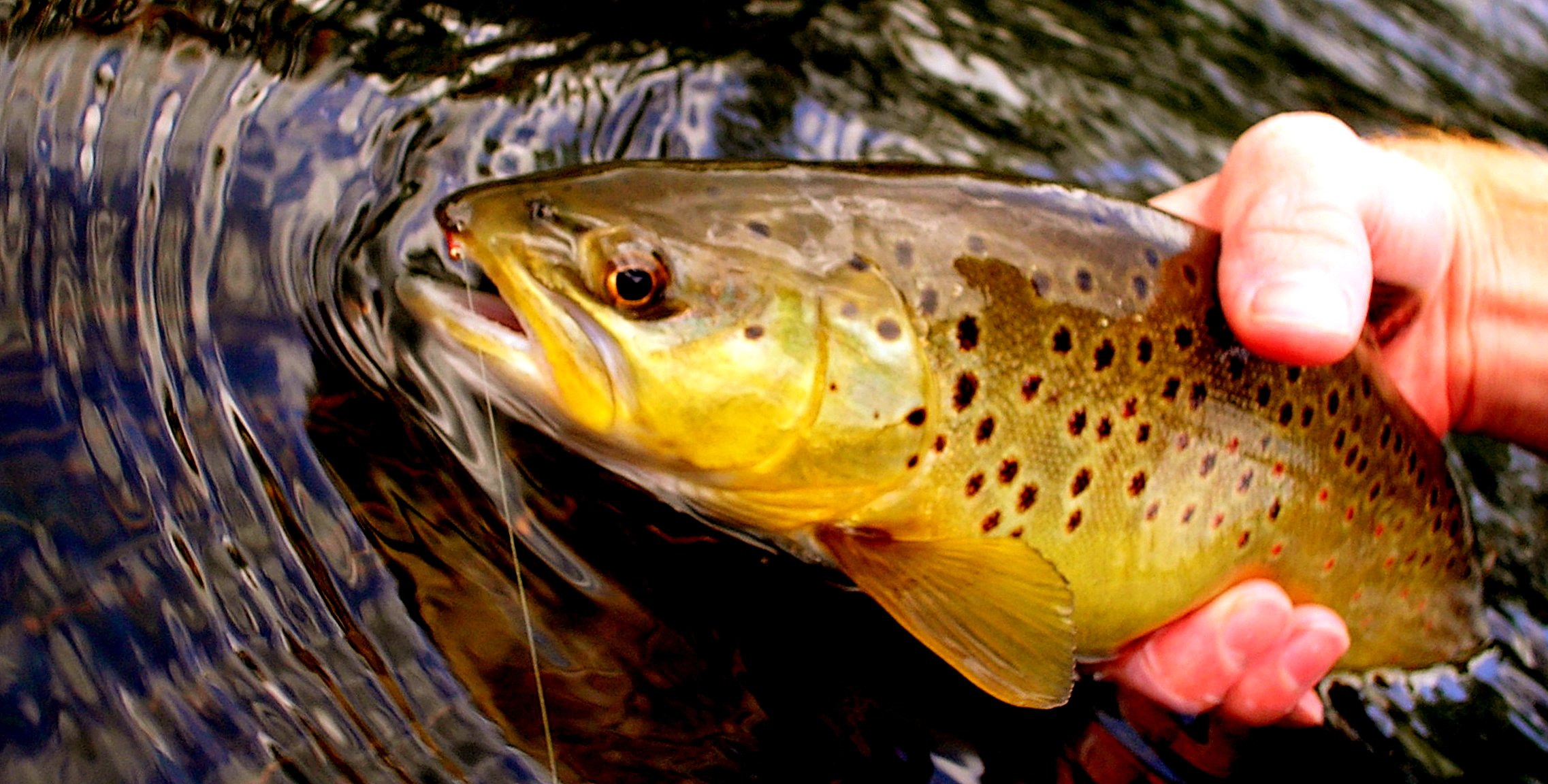 Fly Fishing West Branch Ausable River NY | Trout Pro Store