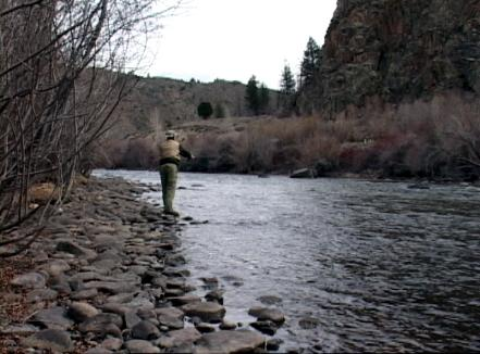 Gunnison river colorado fly fishing trout pro store for Gunnison river fly fishing
