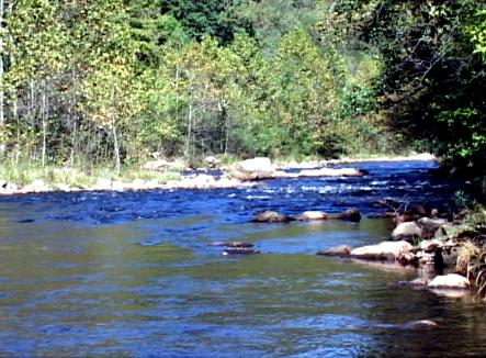 Savage river maryland fly fishing trout pro store for Trout fishing maryland