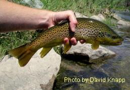 George daniel won the united states national fly fishing for George daniel fly fishing