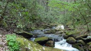 Trout Fishing Garden Creek Stone Mountain State Park North Carolina